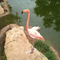 Photo taken at Abilene Zoo by Bobby M. on 6/8/2013