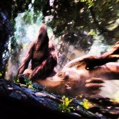 Das Foto wurde bei King Kong 360 3-D von Alberto M. am 3/9/2014 aufgenommen