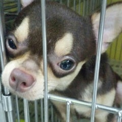 Photo taken at Cartimar Pet Center by jeck a. on 6/4/2015