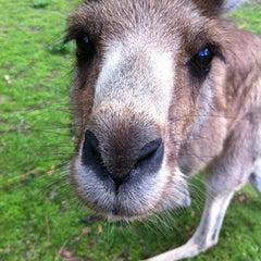 Photo taken at Lone Pine Koala Sanctuary by Nicholas P. on 7/21/2012