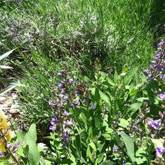 Photo taken at Wicker Park by Joel K. on 5/14/2012