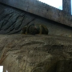 Photo taken at Congo River Rapids by Holly S. on 11/16/2011