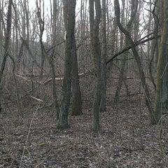 Photo taken at Rezerwat przyrody Żurawiniec by Artur H. on 3/2/2014