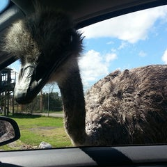 Photo taken at West Midland Safari & Leisure Park by Vicky S. on 8/16/2013