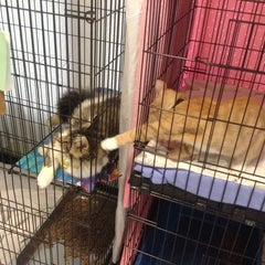 Photo taken at Monadnock Humane Society Shelter by Mary on 8/8/2014