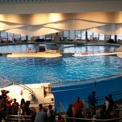 Photo taken at Dolphin Show by Robert W. on 8/12/2014