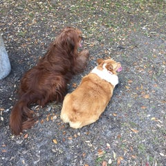 Photo taken at Al Lopez Dog Park by Sarah C. on 2/22/2015