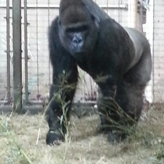 Photo taken at Great Ape House at the National Zoo by Chrissy L. on 3/3/2013