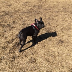 Photo taken at Dog Park by Hyojung L. on 3/24/2014