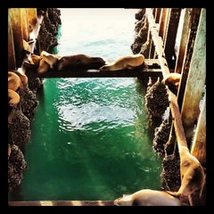 Photo taken at Sea Lion Observatory Deck by Angela D. on 1/4/2014