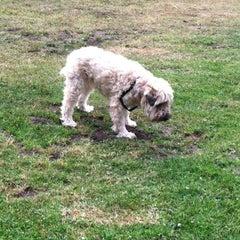 Photo taken at Crocker Amazon Park Dog Play Area by Scott C. on 10/4/2012