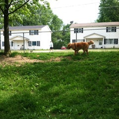 Photo taken at Medina Dog Park by Holly L. on 6/1/2014