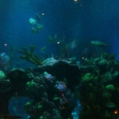 Photo taken at Coral Reef Restaurant by Jeanine Y. on 11/28/2012