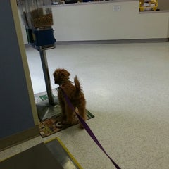 Photo taken at Dog and Cat Hospital by Ashley S. on 4/15/2013