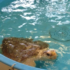 Photo taken at Georgia Sea Turtle Center by Marti S. on 4/3/2013