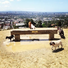 Photo taken at Runyon Canyon Park by Sal E. on 5/8/2013