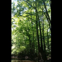 Photo taken at Congaree National Park by Laura C. on 5/24/2015