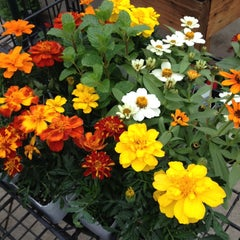 Photo taken at Calloway's Nursery by Audrey kay F. on 3/22/2014
