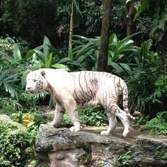 Photo taken at Singapore Zoo by Mickey S. on 5/5/2012