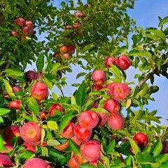 Photo taken at Applecrest Farm Orchards by Allie L. on 10/8/2012