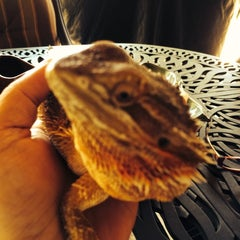 Photo taken at Reptile Island by Shirley C. on 7/14/2014