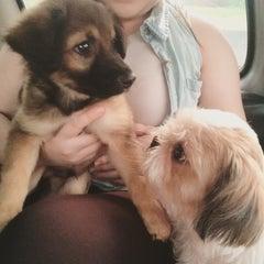 Photo taken at Cartimar Pet Center by Abigail S. on 6/16/2015
