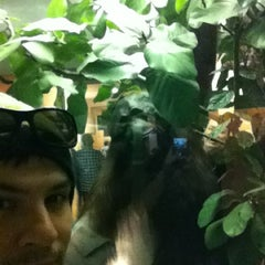 Photo taken at Hall Of Primates by Wellington A. on 11/12/2012