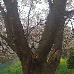 Photo taken at 富岡総合公園 by Fujimi T. on 3/29/2015