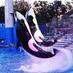 Photo taken at SeaWorld Orlando by Chanuttha C. on 12/28/2012