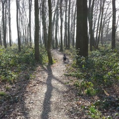 Photo taken at Vormerse Bos by Moermanology on 3/12/2014