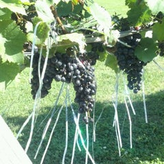Photo taken at Newport Vineyards by Chuck P. on 9/22/2012