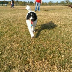 Photo taken at Camp Barkeley Dog Park by DANDREA C. on 11/8/2012