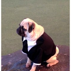 Photo taken at Animal Actors on Location! by Jenn B. on 12/30/2012
