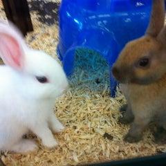 Photo taken at Pet Supermarket by Cuupcake C. on 5/4/2012