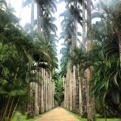 Photo taken at Jardim Botânico do Rio de Janeiro by Hillary H. on 3/20/2013