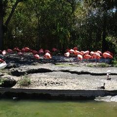 Photo taken at Zoo Miami by Iryna A. on 3/28/2013