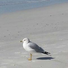 Photo taken at Tiki Gardens Beach Spot by Diane C. on 12/10/2013