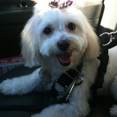 Photo taken at PetSmart by Shanny on 10/17/2012