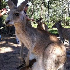 Photo taken at Lone Pine Koala Sanctuary by Abd M. on 4/19/2013