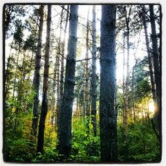 Photo taken at Rezerwat przyrody Żurawiniec by Jakub K. on 10/13/2012
