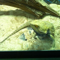 Photo taken at The Reptile Wrangler by Trina W. on 2/16/2012