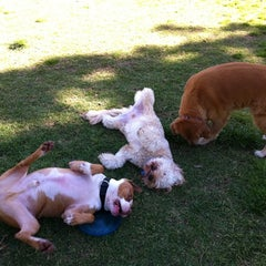 Photo taken at Aliso Niguel Dog Park by Amit T. on 5/22/2011