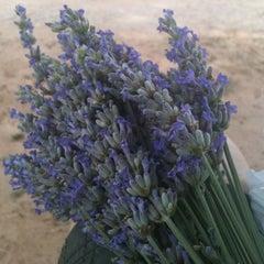 Photo taken at Lavendar Ridge Farms by Chris B. on 5/26/2012