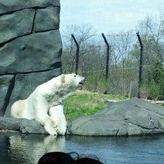Photo taken at Polar Bear Odyssey At Como Park by Kimberly L. on 4/1/2012