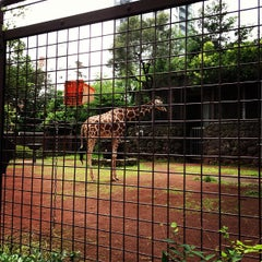Photo taken at 上野動物園 (Ueno Zoo) by セキグチアキヒト on 6/23/2012