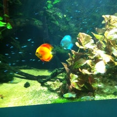 Photo taken at Underwater World by Caleb D. on 11/15/2011