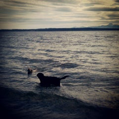 Photo taken at Edmonds Off-Leash Dog Park by John P. on 6/21/2012