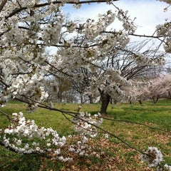 Photo taken at Druid Hill Park by Justine M. on 4/6/2011