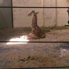 Photo taken at Giraffe House by Josh B. on 4/3/2012