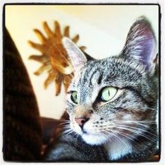 Photo taken at Nature's Pet by Jordon C. on 11/7/2011